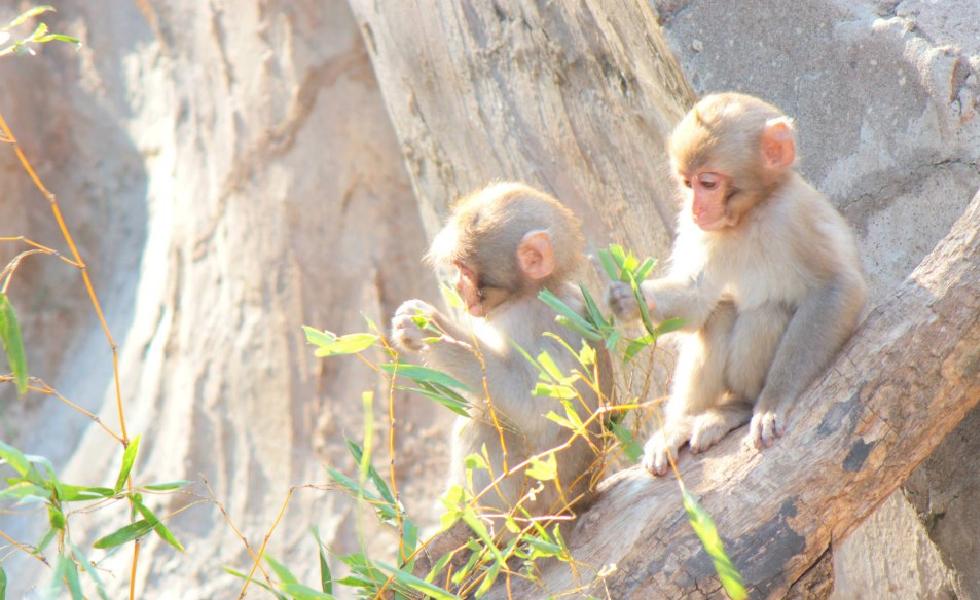 撮影スポット・上野動物園