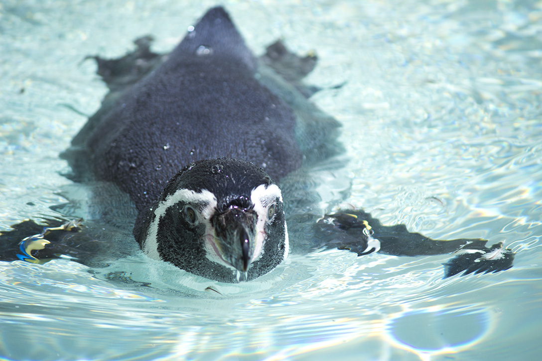 望遠レンズで動物園の動物を撮影してきたよ。