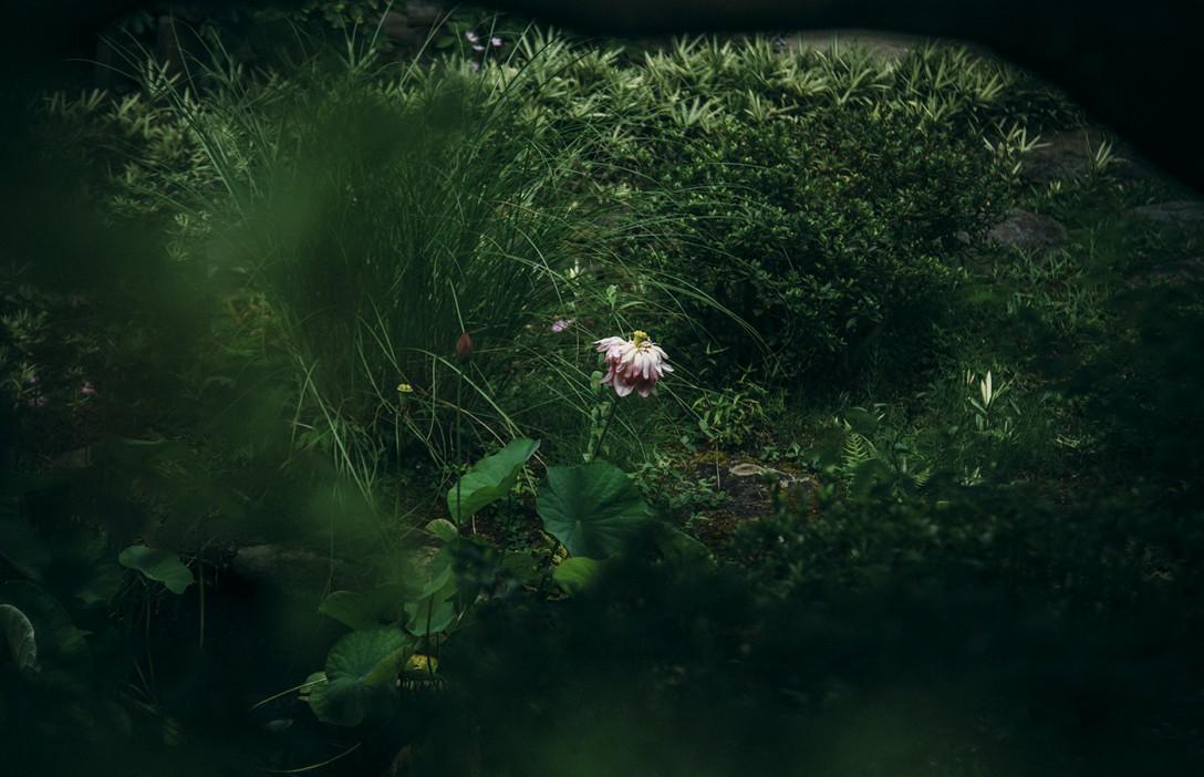 覗いた先に一輪の花