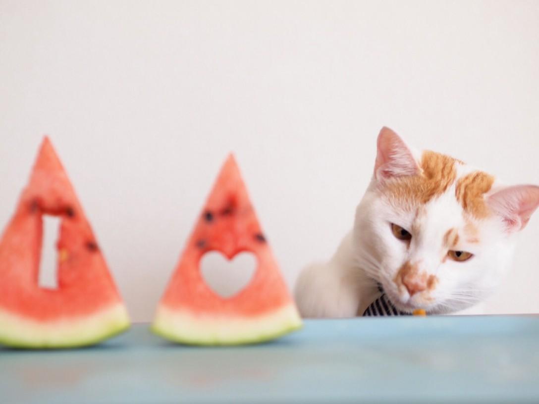 【注目GIRL】にゃーさんが撮る、世界で一番可愛い《猫写真》