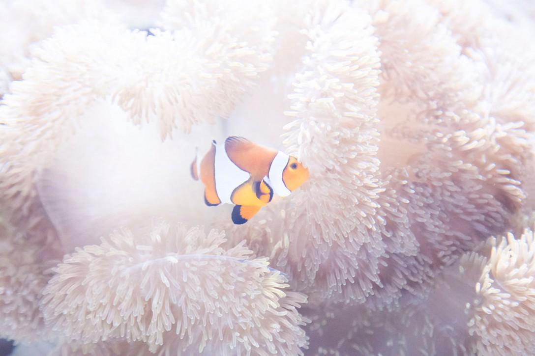 【関東】水族館おすすめ撮影スポットランキング《10選》