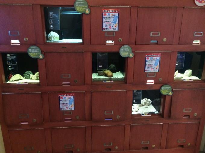 ヨコハマおもしろ水族館・赤ちゃん水族館