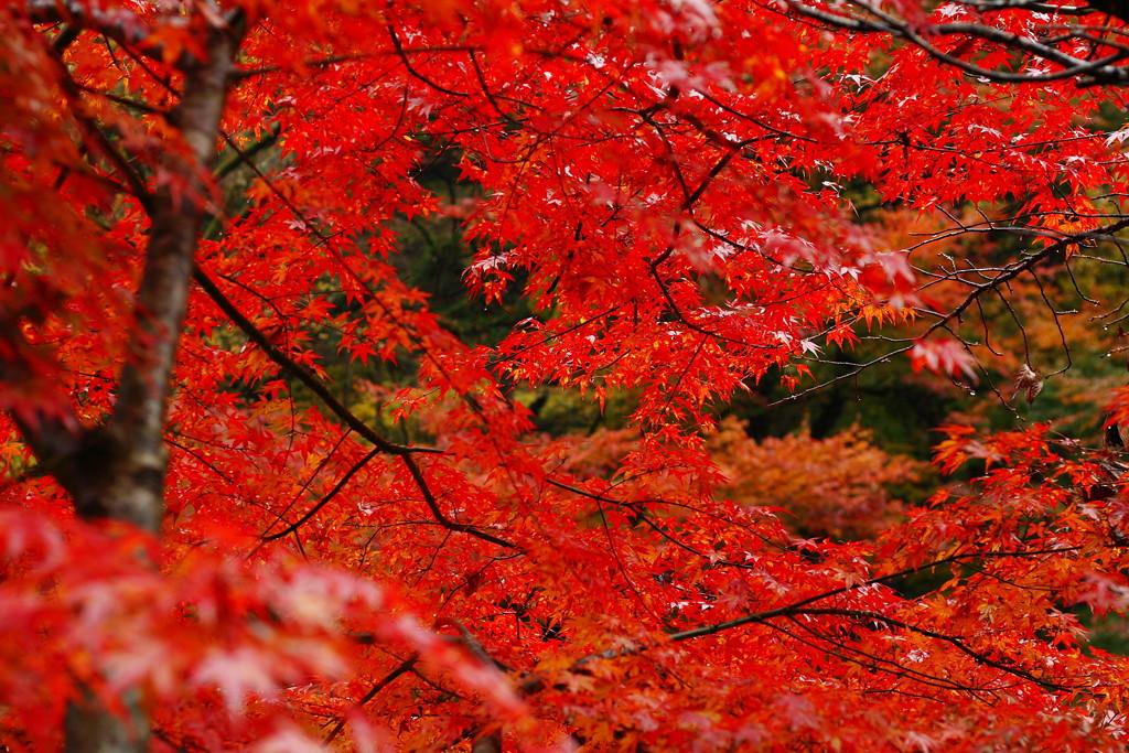 奥多摩で紅葉を撮影しよう!奥多摩の紅葉スポット《9選》