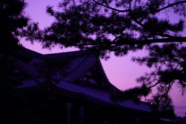 松のシルエットが大人な雰囲気になったかなと思います。