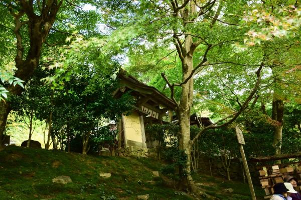 京都、大原…三千院。そして、寂光院。