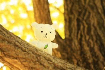 秋の写真~紅葉撮影会~