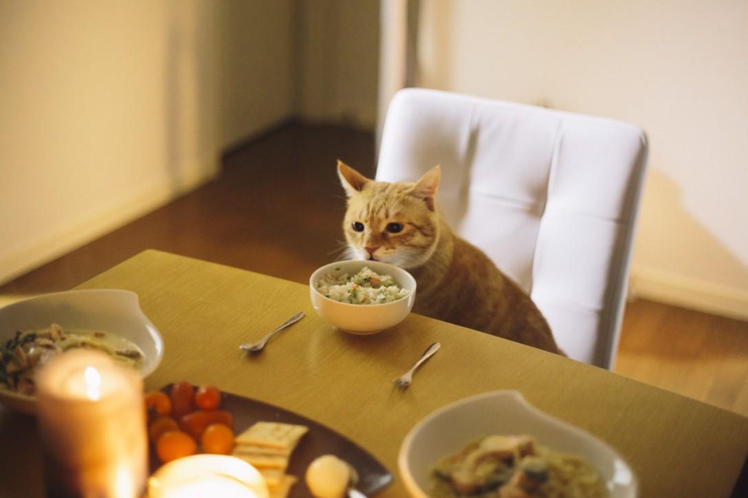 【猫祭り】猫写真がカメラ女子に人気な3つの理由