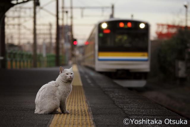 cat_photo004