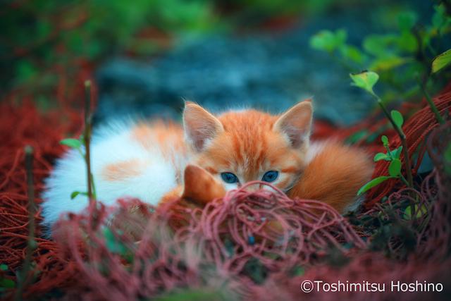 cat_photo005
