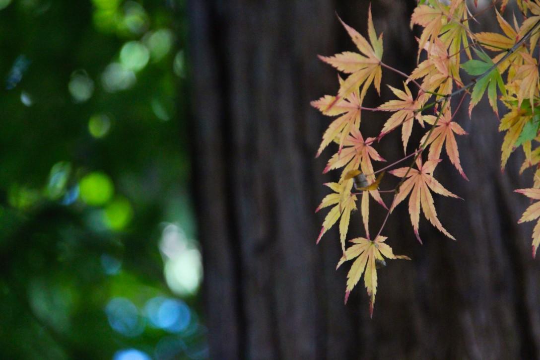 栃木の紅葉の名所