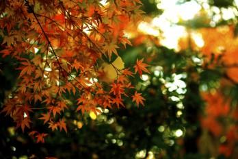 紅葉日和♪新宿御苑と小石川公園を散策してきた。