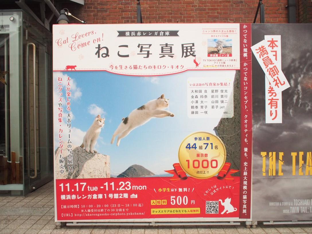 【猫部】史上最大規模のねこ写真展に行ってきた!