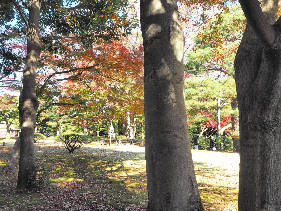殿ヶ谷戸庭園~紅葉撮影~
