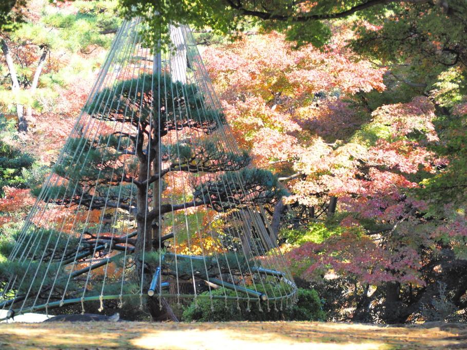 殿ヶ谷戸庭園~紅葉・2~
