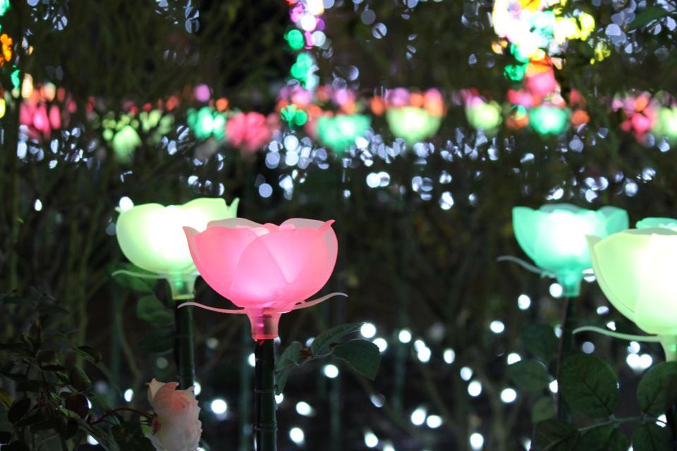 【光の花畑】関東三大イルミネーションの足利フラワーパークが美しすぎる!