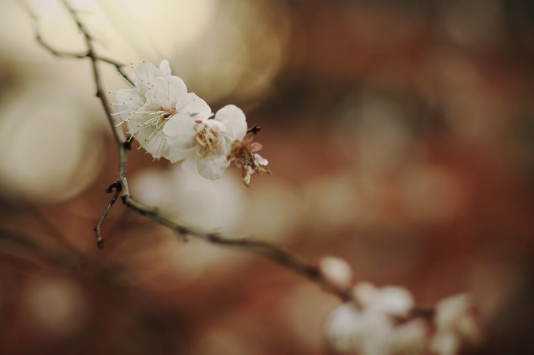 上野散策で見つけたお花たち