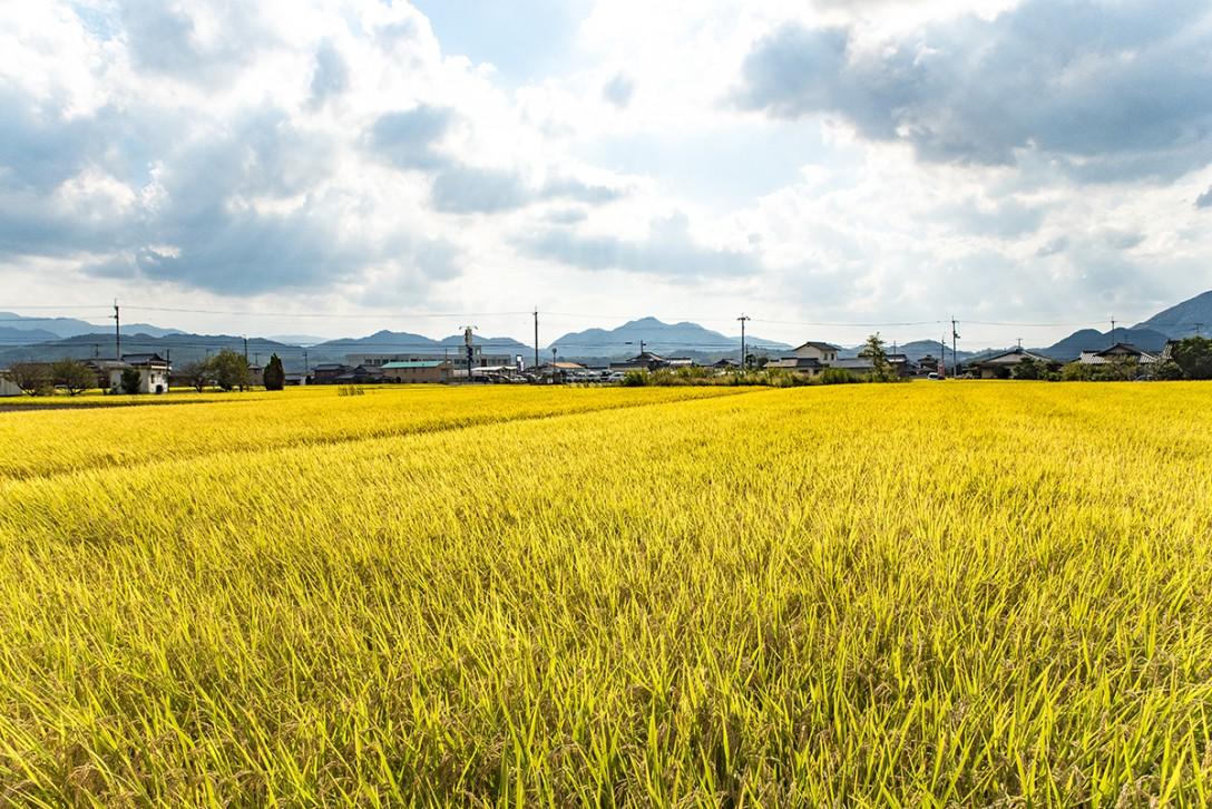 【黄金の絨毯】大自然に囲まれた綾川町へ、ほっこり女子旅。《癒される》