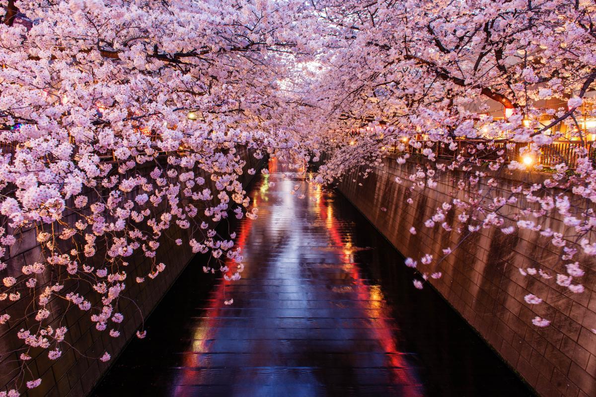 【定番】綺麗な桜を撮りたい!東京のおすすめ花見撮影スポット【7選】