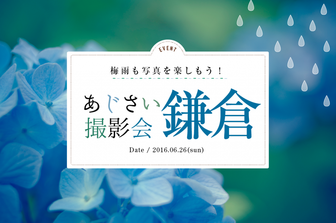 梅雨も写真を楽しもう!あじさい撮影会in鎌倉
