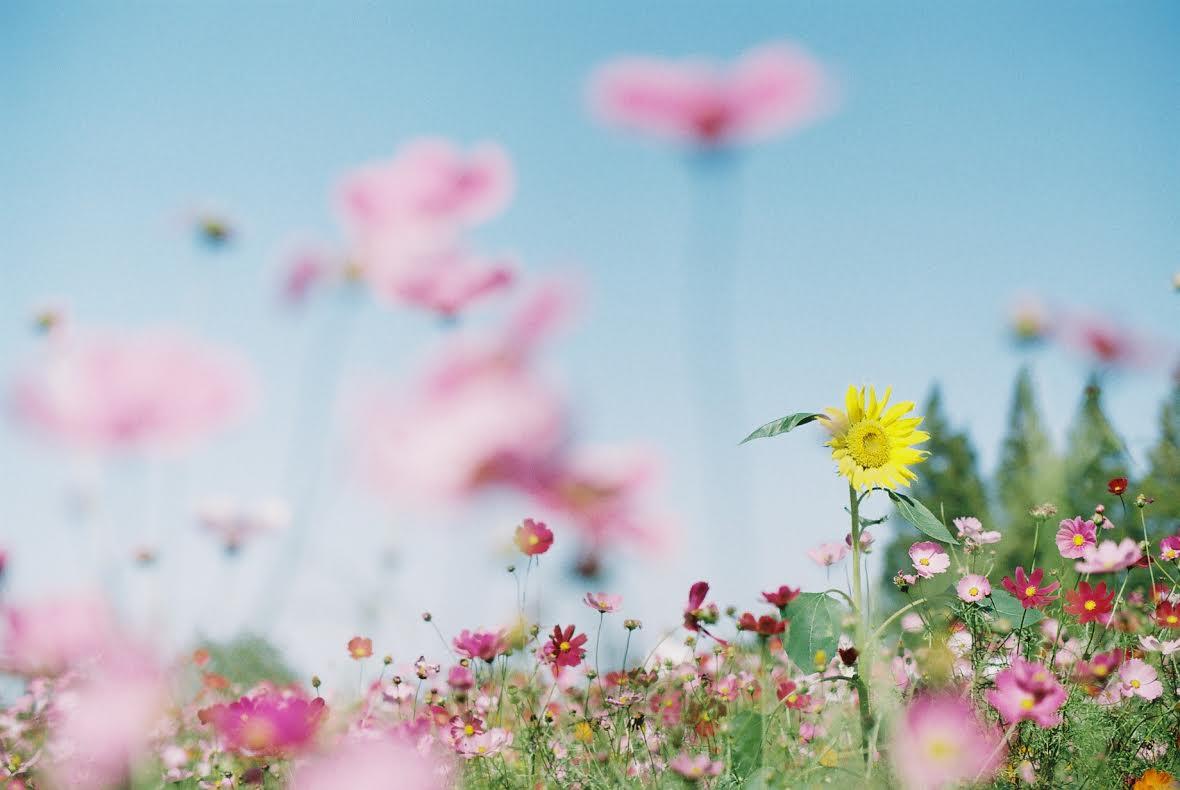 ◆写真⑩◆C200-OM1-Mizuho