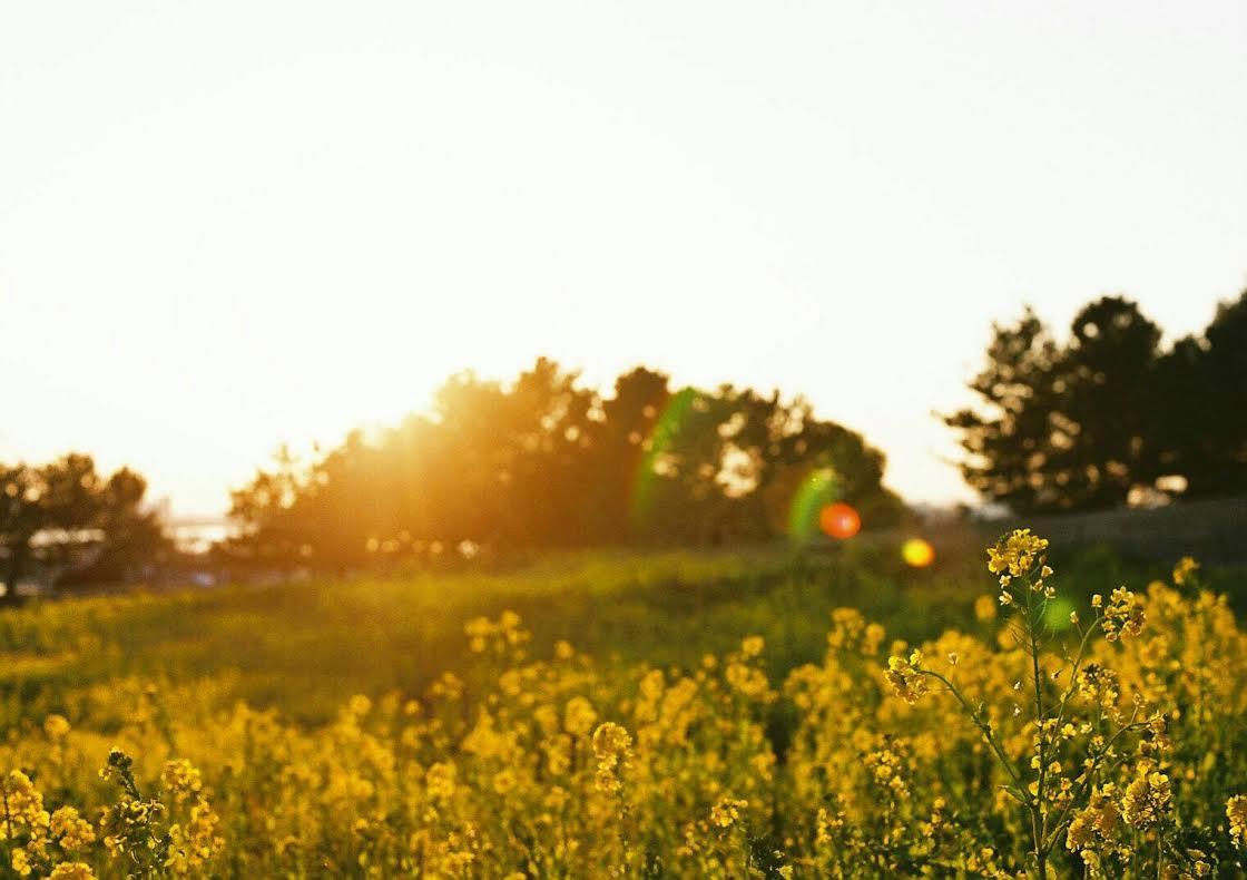 ◆写真⑲◆premium400-Nikon FE-おと2