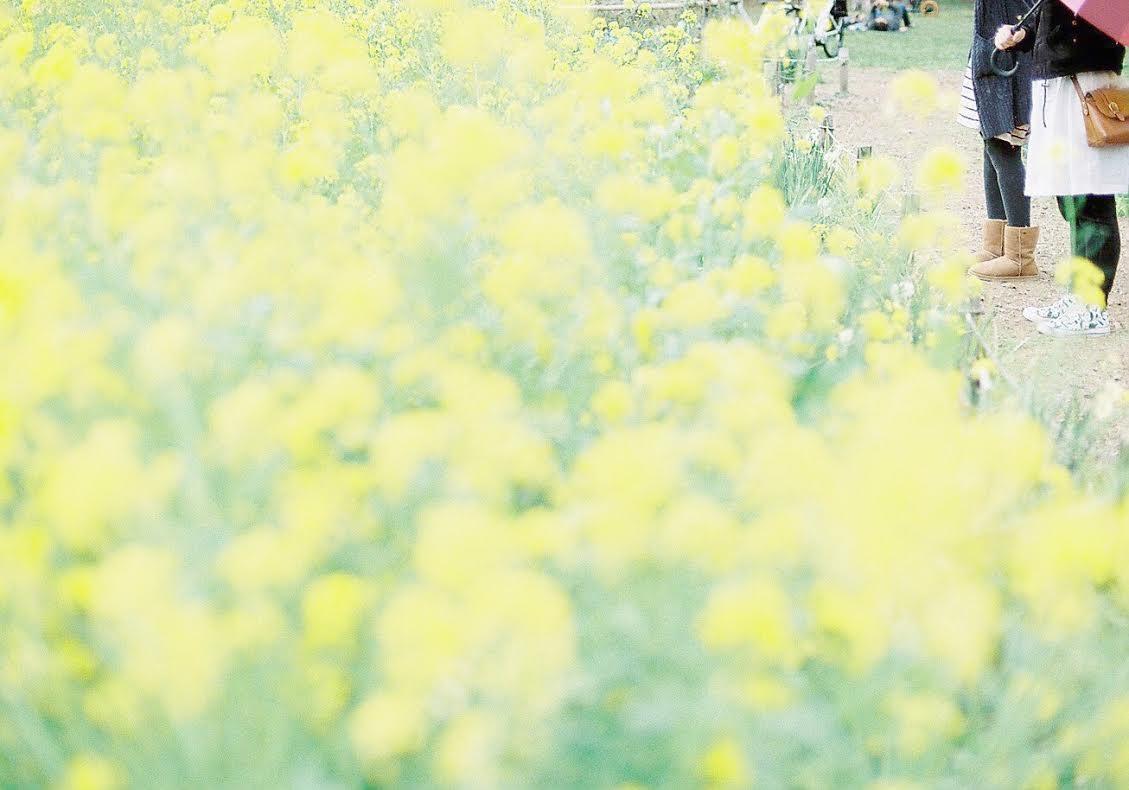 ◆写真16◆supergold400-newFM2-taka