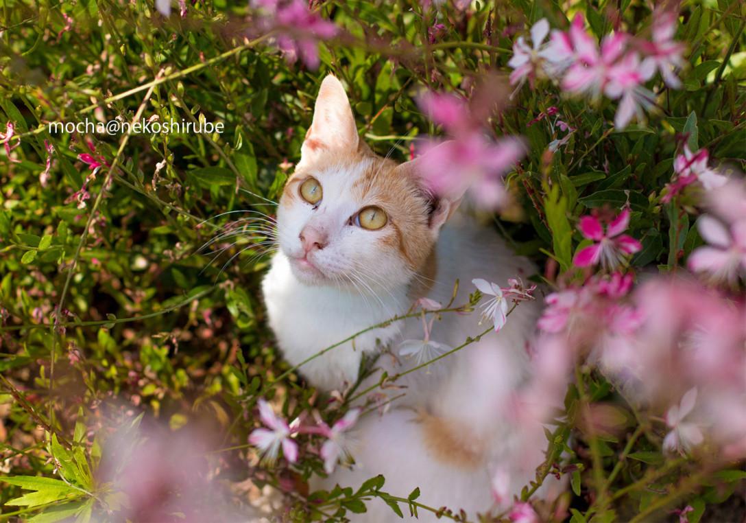 《猫写真》可愛すぎる!カメラガールズ・mochaさんが撮る猫写真の魅力。
