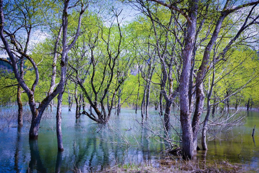幻想的な水没林