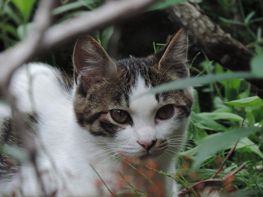 牧場で猫ちゃん発見!