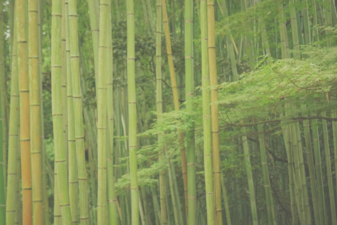 嵐山 竹林 NIKON D5500