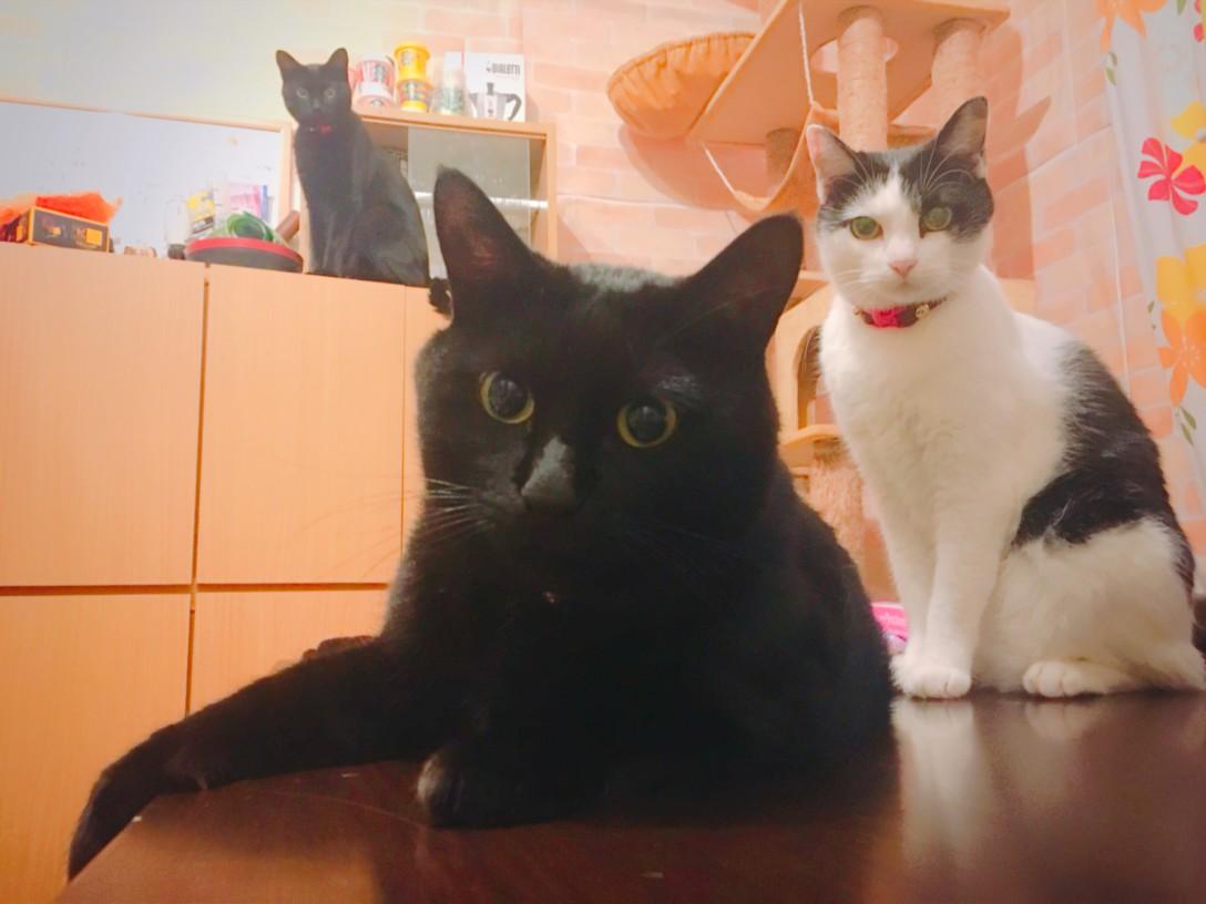 はなこファミリー(875FAM)です。よろしくネ♪ 上:おいち、中:鈴太郎、左:華子