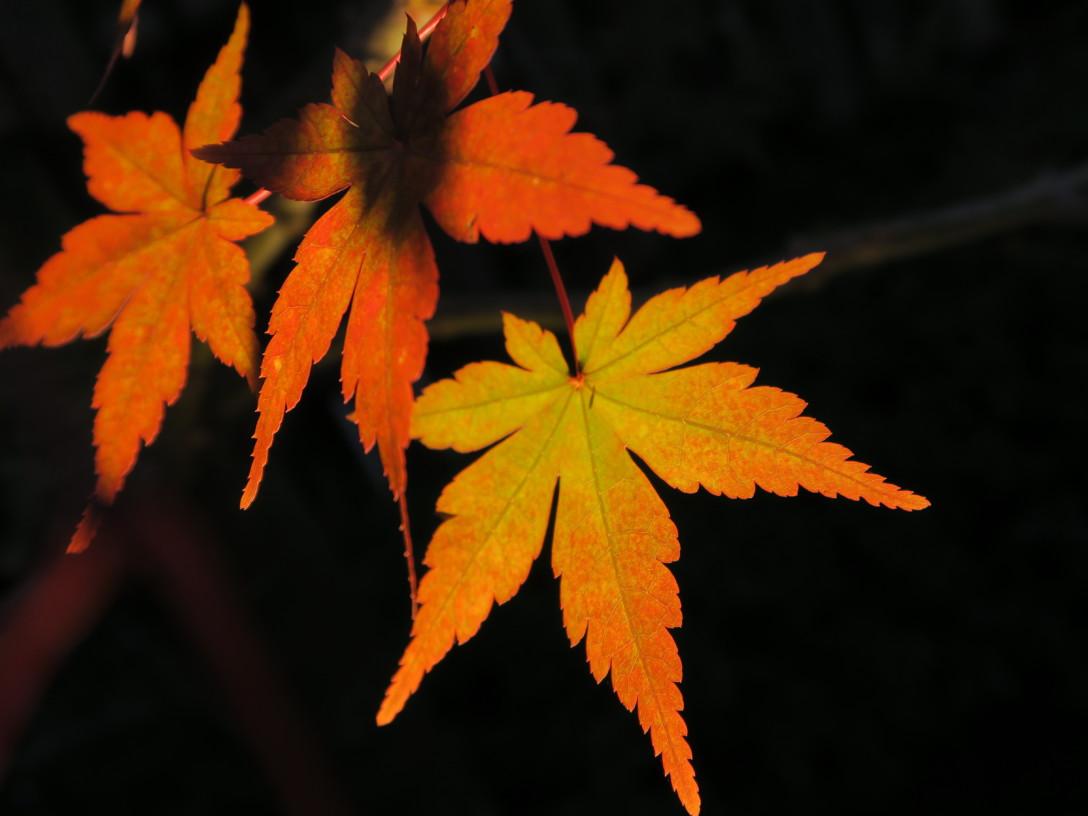 秋を身近に🍁