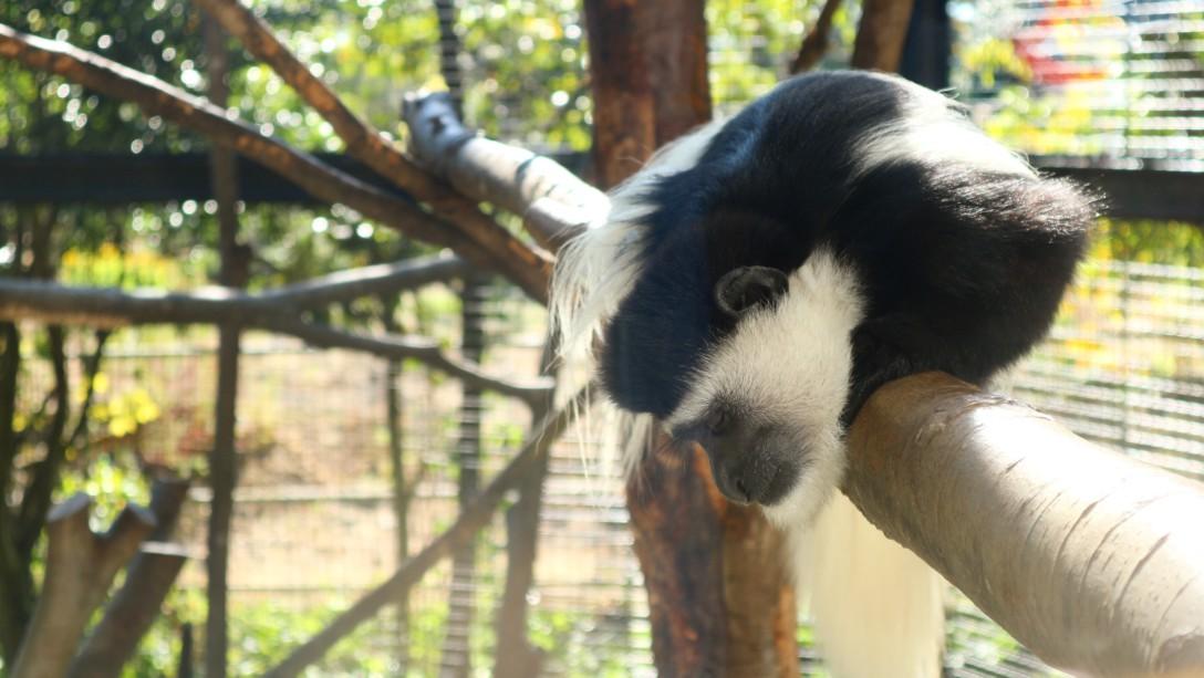 -八木山動物公園-