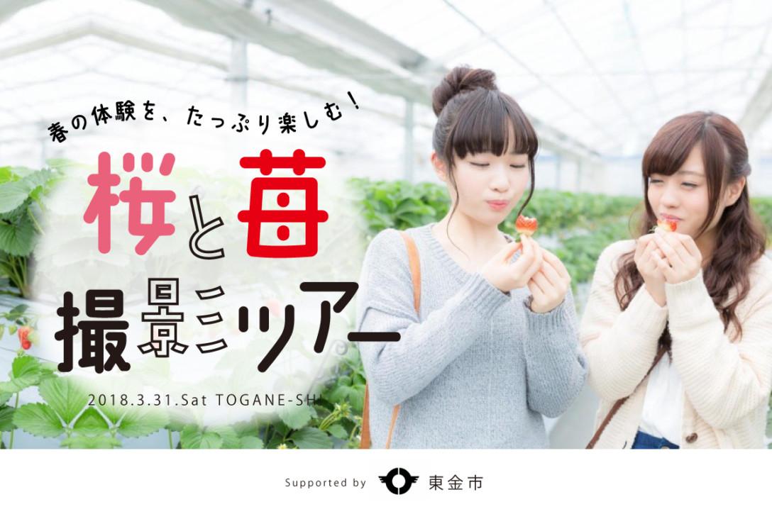 【3月31日】東金市・桜と苺撮影ツアー開催のお知らせ<参加無料>