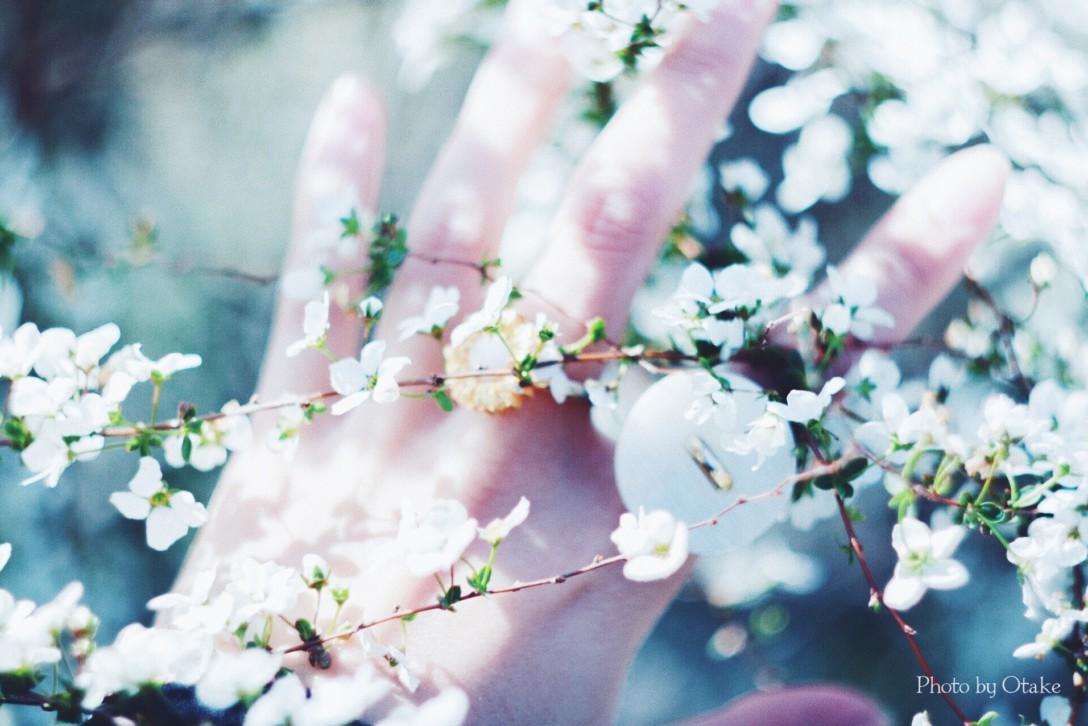 ハピメモ🍀春
