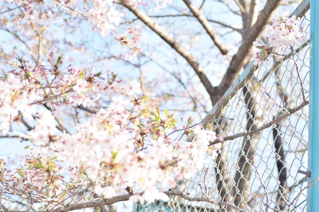 春を見つけに、2