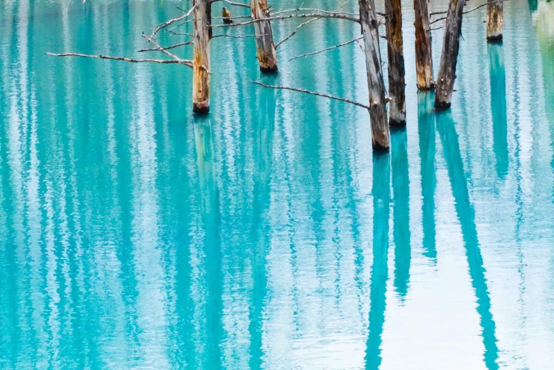 初投稿です(╹◡╹)美瑛:青い池