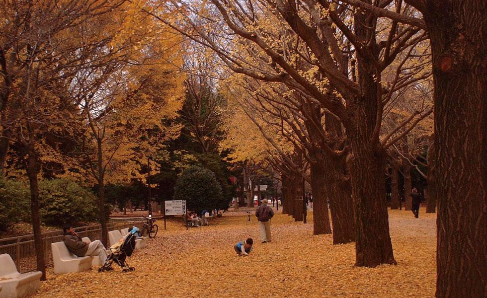 撮影スポット・光が丘公園