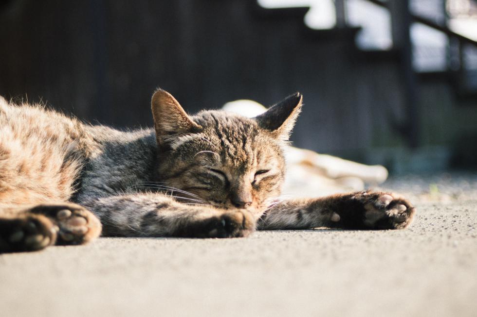 護国寺・猫