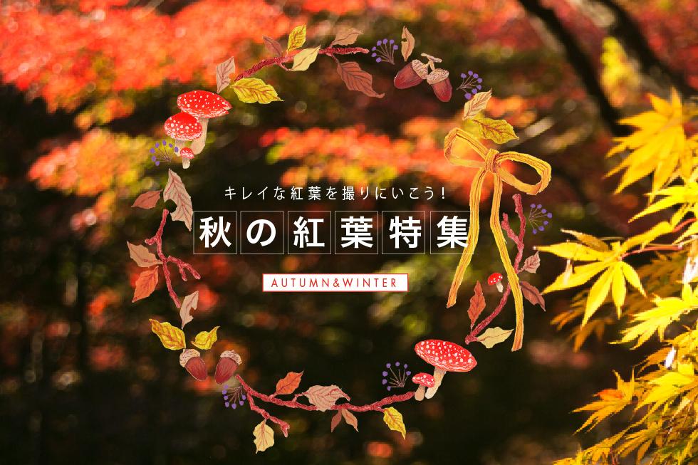 秋の紅葉特集
