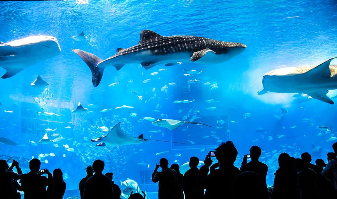 【一眼レフ】水族館での写真撮影が上手くなる5つのコツ