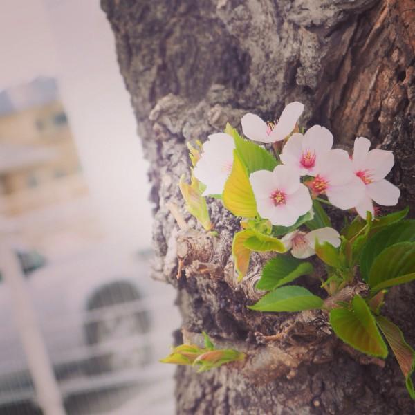 春から夏へ@2015