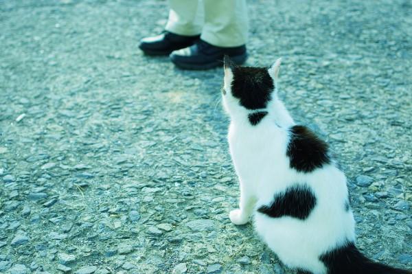 日本最北の猫島「田代島」さ来てけらいん!