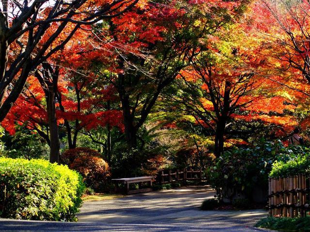 池田山公園の紅葉