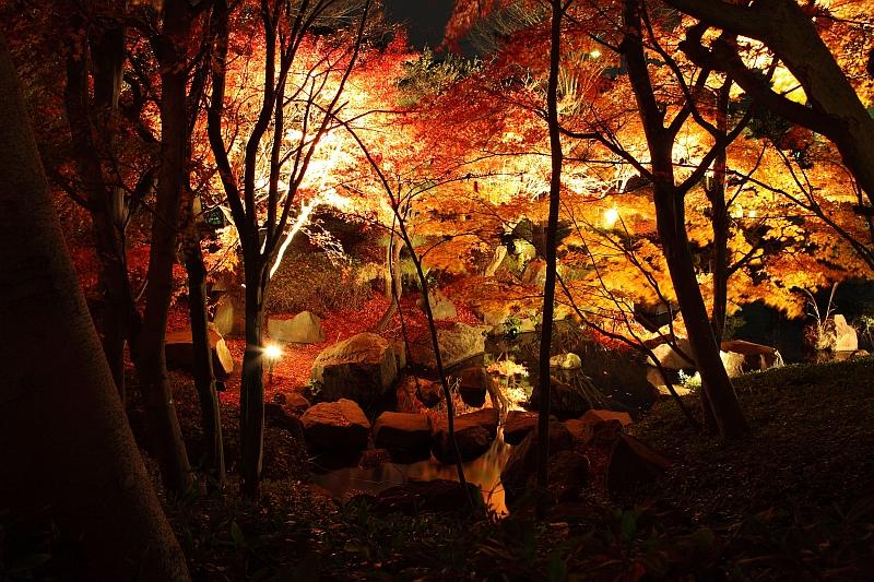 大磯城山公園の紅葉