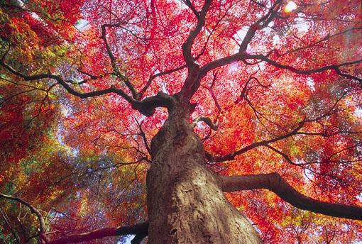 清水公園の紅葉