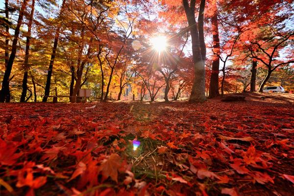 月の石もみじ公園の紅葉