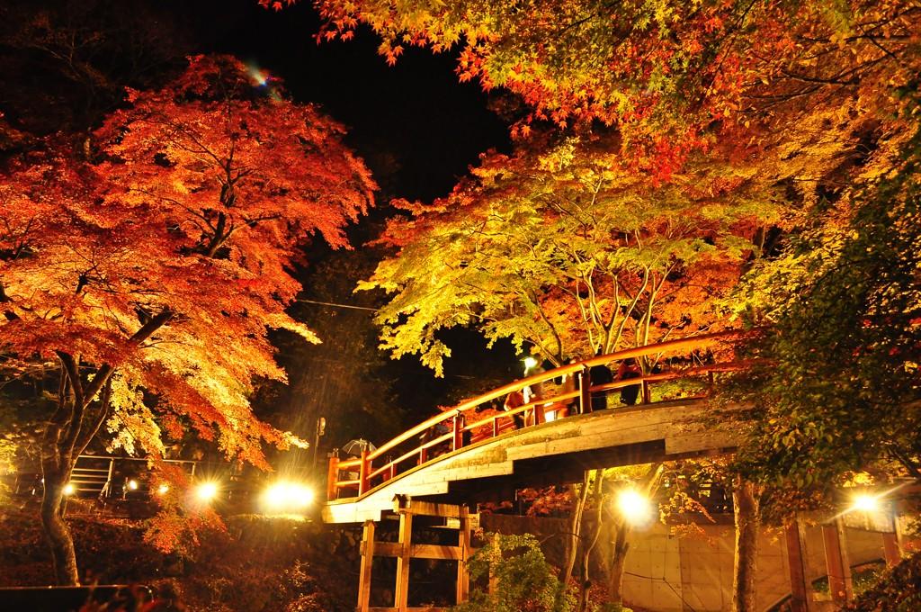 autumnleaves015