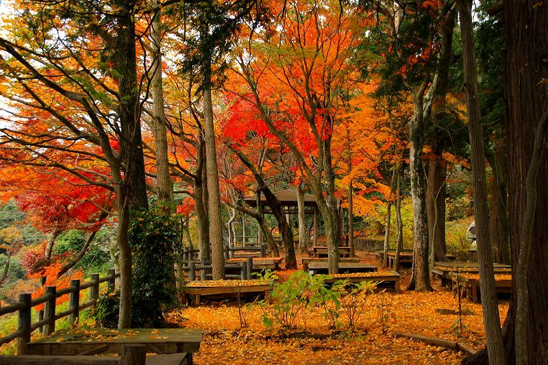 太平山自然公園の紅葉