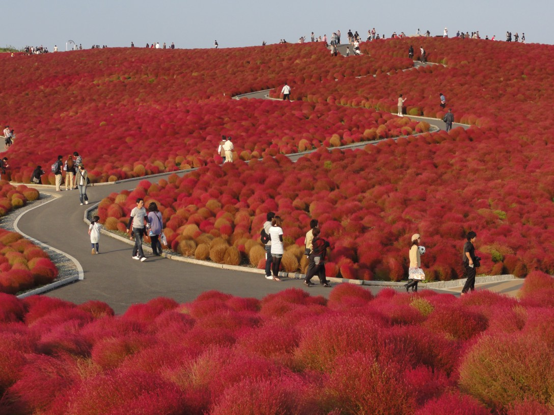 ひたち海浜公園の紅葉